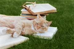 Cute cat with book and glasses lying on green lawn Stock Photo