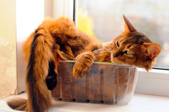 Cute cat in a box Royalty Free Stock Images