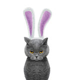 Cute cat with bunny ears -- isolated on white Stock Photography