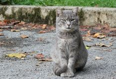 Cute cat. In a campsite in France Royalty Free Stock Photography