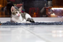 Cute cat on the carpet Royalty Free Stock Photos