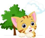 Cute cat cartoon Royalty Free Stock Image