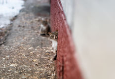 Cute  cat cautiously looks out of the basement Royalty Free Stock Photography