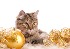 Cute cat and christmas decoration Stock Image