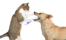 Cute cat cleaning a dogs teeth Stock Photo