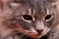 Cute cat in close up photo Royalty Free Stock Photos