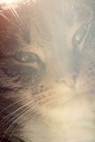 Cute cat close-up portrait. Sleepy, happy time Royalty Free Stock Image
