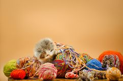 Cute cat with colorful wool yarn balls. Cute kitten playing with balls of knitting wool yarn on orange background. Cute little kitten. Baby cat playing with ball royalty free stock photography