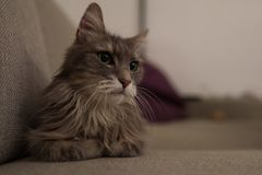 Cute cat on couch stock image