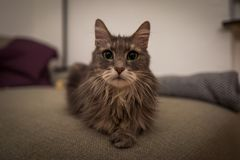 Cute cat on couch stock photography