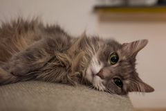 Cute cat on couch stock photos
