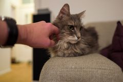 Cute cat on couch royalty free stock photos