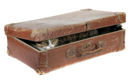 Cute cat covered in old suitcase Stock Photo