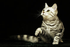 Cute cat in the dark Royalty Free Stock Image