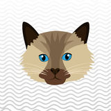 Cute cat design. Illustration eps10 graphic Royalty Free Stock Photography