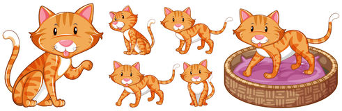 Cute cat in differnet actions Stock Photo