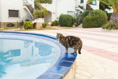 Cute cat drinking water from swimming pool stock photos