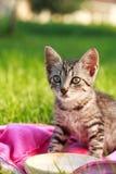 Cute cat drinks milk. Cat-mammal-pet-animals Royalty Free Stock Photos