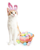 Cute Cat Easter Bunny With Basket Stock Photo