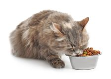 Cute cat eating from bowl on white background stock photo