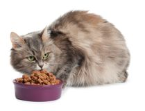 Cute cat eating from bowl on white background stock images