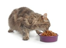 Cute cat eating from bowl on white background stock photos