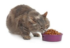 Cute cat eating from bowl on white background royalty free stock photography