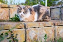 Cute cat enjoying himself outdoors. the three-cat stock photo