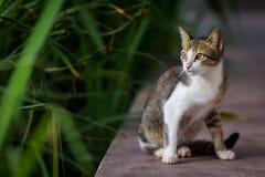 cute cat stock photos