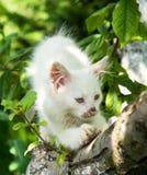 Cute cat enjoying his life Stock Images