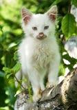 Cute cat enjoying his life Royalty Free Stock Image