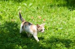Cute cat enjoying his life Royalty Free Stock Photos