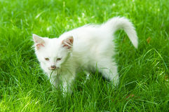 Cute cat enjoying his life Royalty Free Stock Images