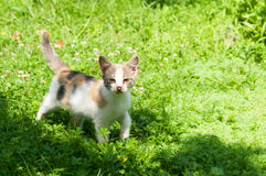 Cute cat enjoying his life Stock Image