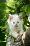 Cute cat enjoying his life Royalty Free Stock Photo