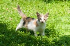 Cute cat enjoying his life Royalty Free Stock Photography