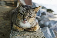 Cute cat enjoying his life. The striped cat sitting on the seaside Royalty Free Stock Photography
