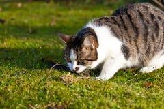 Cute cat enjoys the garden Stock Photos