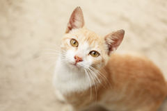 Cute cat face close up Royalty Free Stock Image