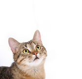 Cute cat face. Funny animal look. Close up portrait Stock Image