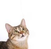 Cute cat face Stock Image