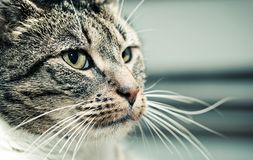 Cute cat face portrait. Adorable kitten series. Stock Photography