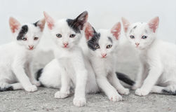 Cute cat family Royalty Free Stock Photography