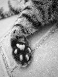 Cute Cat feet close up. To give a cat feet a close-up on stair Stock Photos