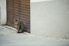 Cute cat on Filed in Siena Italy Royalty Free Stock Photo