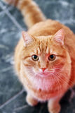 Cute cat on the floor Royalty Free Stock Image