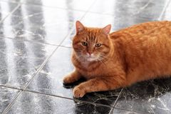 Cute cat on the floor Royalty Free Stock Photography