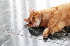 Cute cat on the floor Royalty Free Stock Images