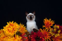 Cute cat and flowers Stock Image
