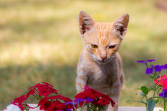 Cute cat and flowers Royalty Free Stock Photo